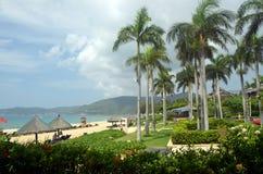 在岸,富饶,亚龙湾海湾,中国,海南的棕榈树 图库摄影