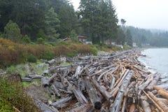 在岸洗涤的漂流木头日志 免版税库存照片