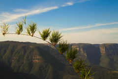 在峡谷全景视图前面的植物 库存图片