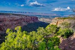 在峡谷峡谷的树在大章克申,科罗拉多 免版税图库摄影