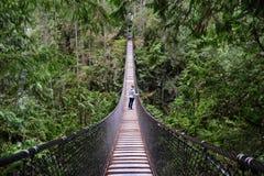 在峡谷的吊桥在雨林里 库存图片