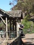 在峡谷,朗塞斯顿,塔斯马尼亚岛的大瀑布步行 免版税库存照片