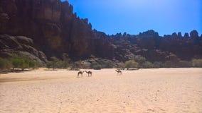 在峡谷Guelta d'Archei里面的亦称全景在东部恩内迪高原,乍得 库存图片
