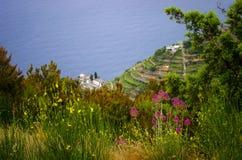 在峭壁一边的意大利花 免版税图库摄影