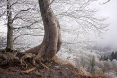 在峭壁上的一棵树 免版税图库摄影
