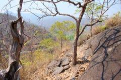 在峭壁或山的干燥树与在操作Luang国立公园,热,清迈,泰国的天空蔚蓝 热天气和干旱 库存图片