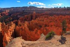 在峭壁的一棵树在不祥之物的背景 Bryce峡谷 免版税库存图片