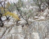 在峭壁的一棵树 免版税库存图片