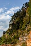在峭壁的杉木在杜米托尔国家公园,黑山 库存图片