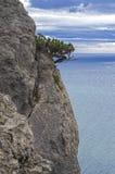在峭壁的杜松树在海上。 免版税图库摄影
