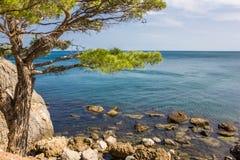 在峭壁的树在海附近 免版税库存照片