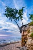 在峭壁的桦树 库存照片