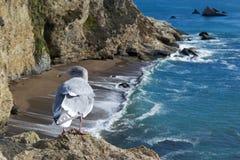 在峭壁的海鸥 图库摄影