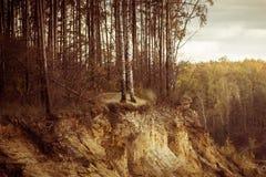 在峭壁的结构树 免版税库存照片