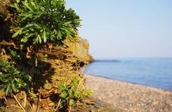 在峭壁的绿色叶子反对在Pebble海滩后的海 r 库存照片