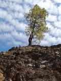 在峭壁的边缘的偏僻的树 免版税库存图片