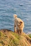 在峭壁的逗人喜爱的狗立场 免版税库存图片