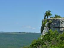 在峭壁的结构树 库存图片