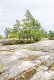 在峭壁的绿色杉树在夏天 免版税图库摄影