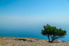 在峭壁边缘的偏僻的绿色树在背景海 库存照片