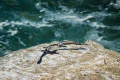 在峭壁边缘的唯一gannet  免版税库存图片