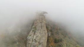 在峭壁边缘的绿色树在雾的 射击 在浓雾浸没的岩石的石柱子 秋天雾神秘的大气  股票视频