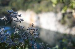 在峭壁边缘的野花 库存图片