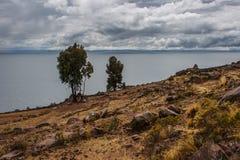 在峭壁, Taquile海岛, Titicaca湖,秘鲁的两棵树 免版税库存照片