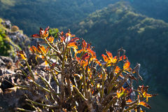 在峭壁`的小的树 免版税图库摄影