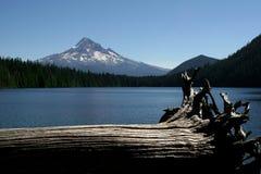 在峰顶的漂流木头 免版税库存照片
