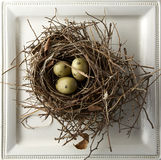 在嵌套的鸡蛋 免版税库存图片