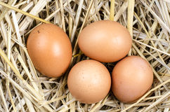 在嵌套的鸡蛋 图库摄影