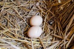 在嵌套的鸡蛋 库存图片
