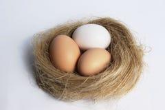 在嵌套的鸡蛋 免版税库存照片