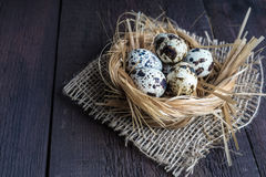 在嵌套的鹌鹑蛋 免版税库存图片