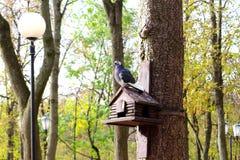 在嵌套箱的鸽子,鸟舍在公园 免版税库存照片