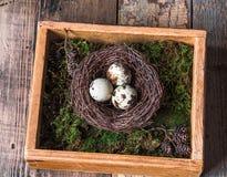 在巢、青苔和鸟羽毛的五颜六色的复活节装饰鹌鹑蛋在木箱 免版税库存照片