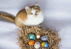 在巢和一只姜猫的复活节五颜六色的鸡蛋在白色背景 图库摄影