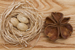 在巢和壳的坚果 库存照片
