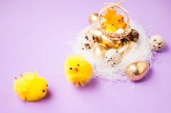 在巢和篮子附近的鸡与在purpel背景,复活节的鸡 图库摄影