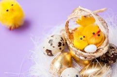 在巢和篮子附近的鸡与在purpel背景,复活节的鸡 免版税库存图片