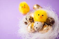 在巢和篮子附近的鸡与在purpel背景,复活节的鸡 免版税库存照片
