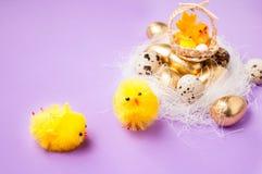 在巢和篮子附近的鸡与在purpel背景,复活节的鸡 库存照片