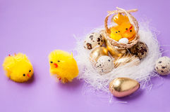 在巢和篮子附近的鸡与在purpel背景,复活节的鸡 免版税图库摄影