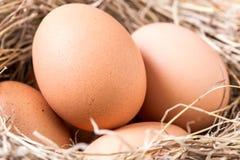 在巢特写镜头的鸡蛋 免版税图库摄影