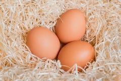 在巢的三个棕色鸡鸡蛋 免版税库存图片