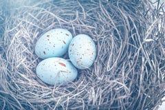 在巢的三个鸡蛋与梦想蓝色定调子的复活节的 图库摄影