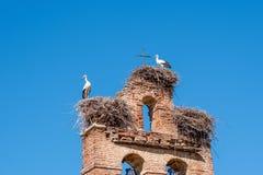 在巢的两只鹳在老教堂钟耸立 免版税库存照片