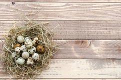 在巢的复活节彩蛋在木背景 平的位置 大模型 免版税库存照片