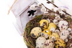 在巢的复活节彩蛋与水仙 免版税图库摄影